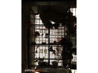 Five portion cage available for sale